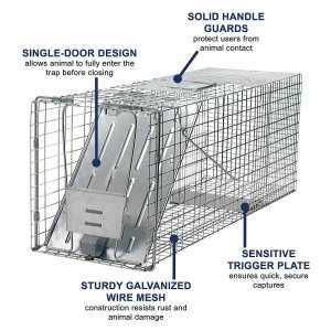 best raccoon trap sets