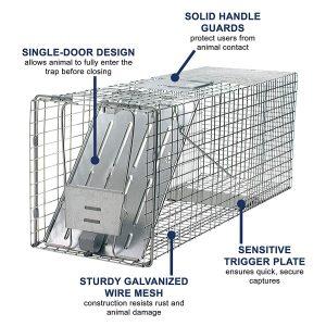raccoon trap best value amazon