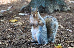 best squirrel trap bait