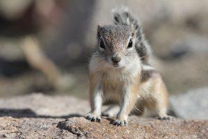best squirrel trap for attic