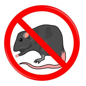 Will Rat Poison Kill squirrels