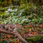 What Keeps Squirrels Away?